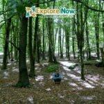 Sweden – Forest